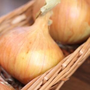 Autumn Planting Onions & Garlic